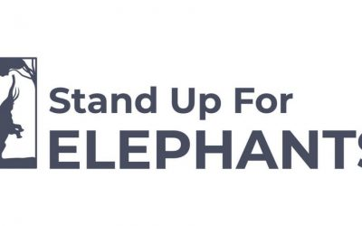Stand up for elephants with ZEF in Central Park